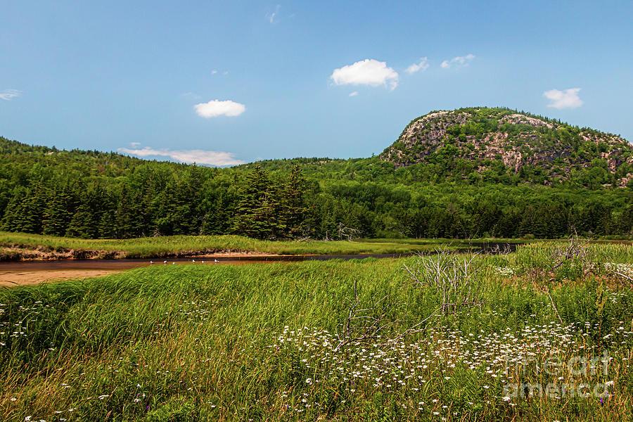 Summer Day Near Beehive Mountain Photograph