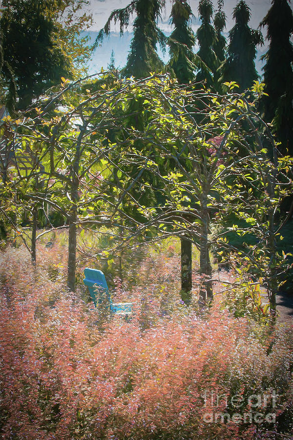 Botanic Gardens Photograph - Summer Dream On A Winter Solstice Day by Marilyn Cornwell