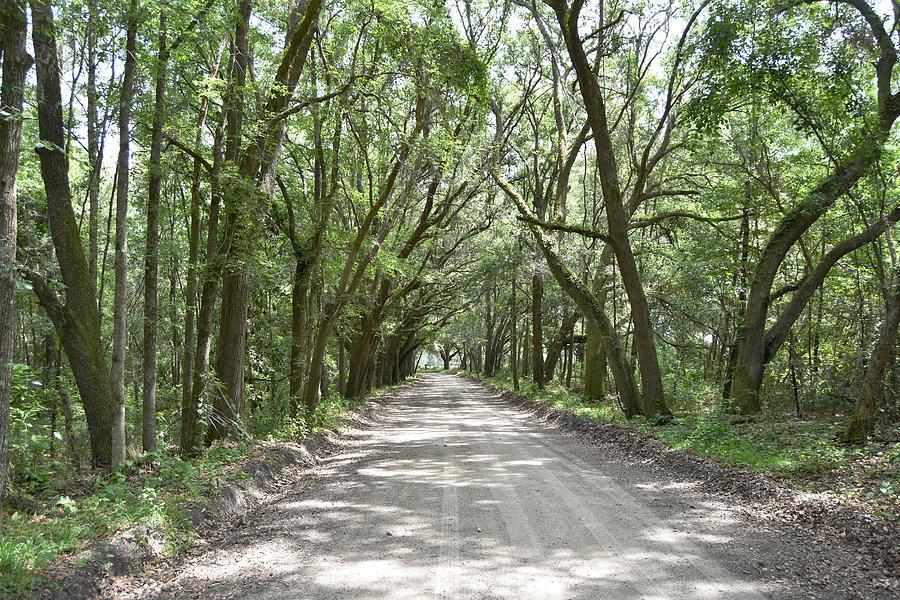 Summer Green Road Photograph