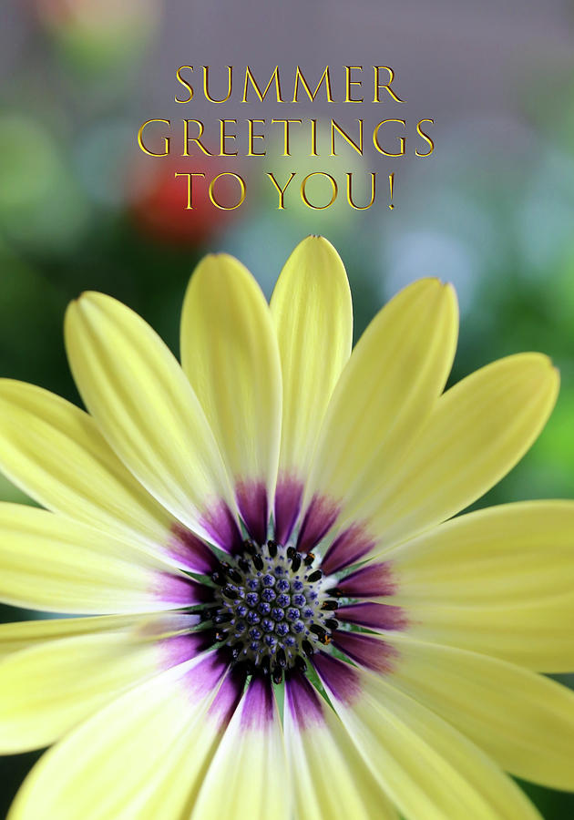 Summer Greetings With An African Daisy Mixed Media