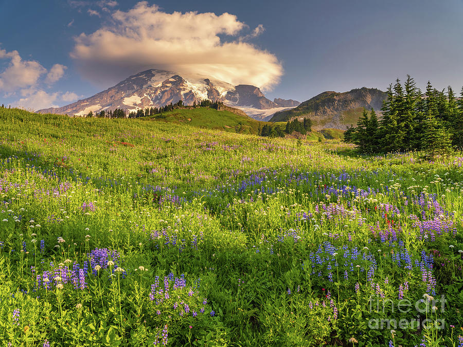 Summer In Mount Rainier National Park Photograph