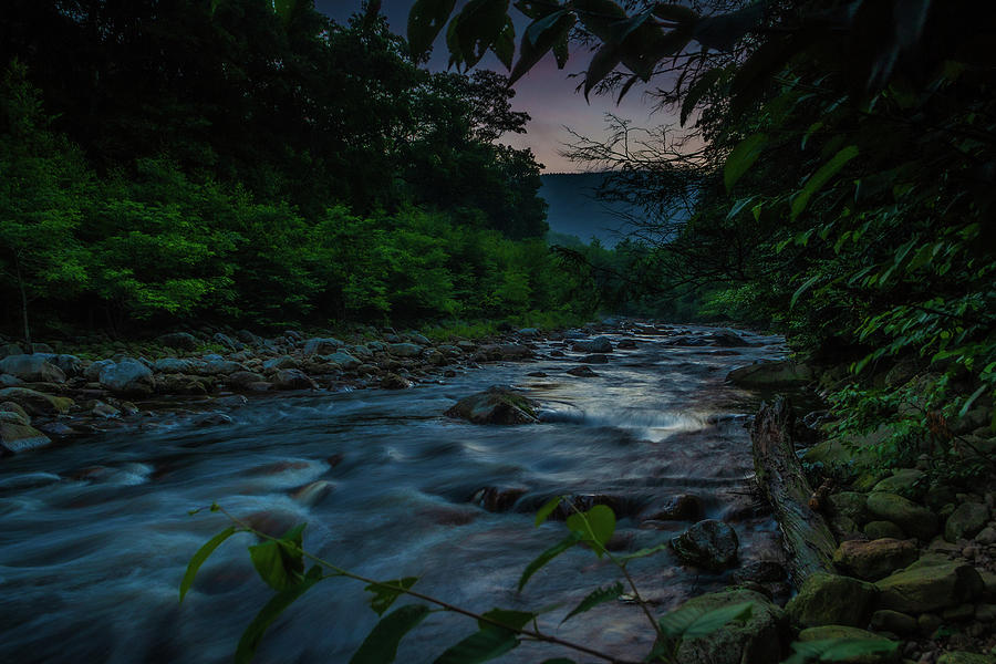 Summer Morning By The Creek Photograph