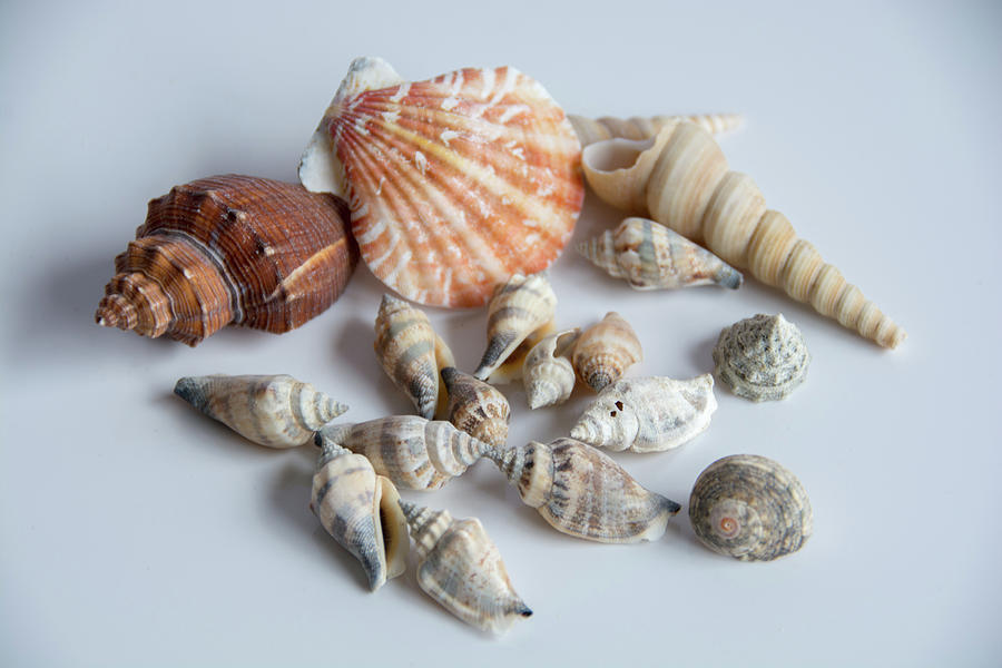 Summer Shells Photograph