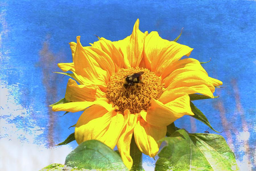 Summer Sunflower And Bee - Artistic Photograph