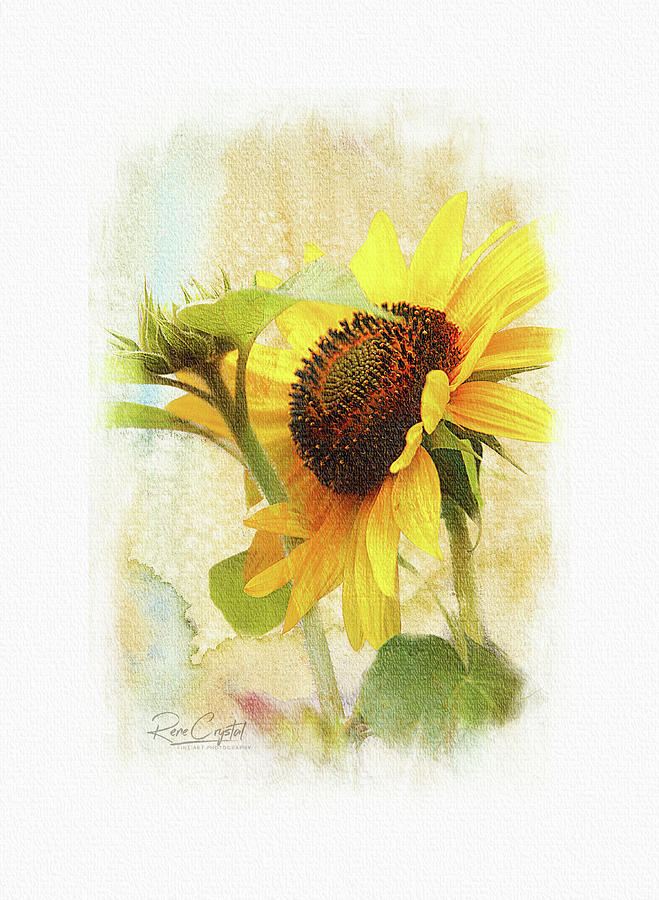 Summer's Big Yellow by Rene Crystal