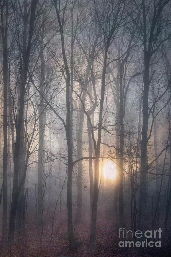 Sun and fog by Izet Kapetanovic