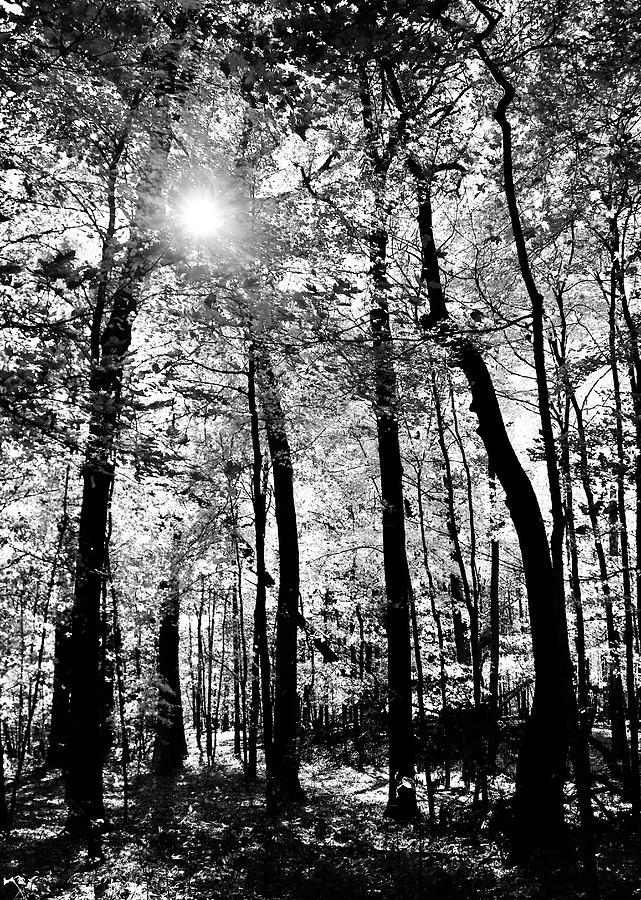 Sun and Woods by Sarah Lilja