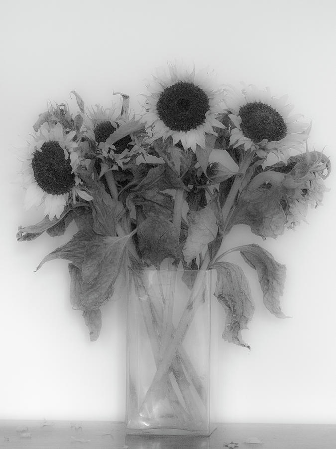 Sun Flowers Photograph