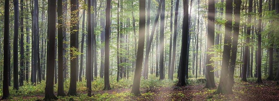 Sun In The Green Forest Photograph