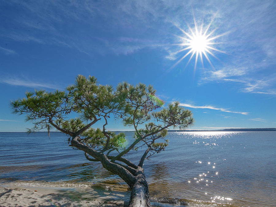 Sunburst Over the Pamlico by Dave Hilbert