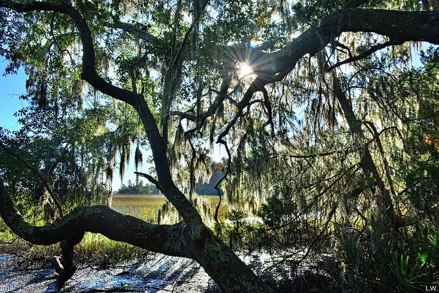 Sunburst Through The Oak Trees by Lisa Wooten