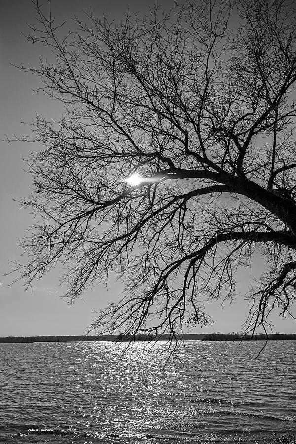 Suncatcher by Dale R Carlson