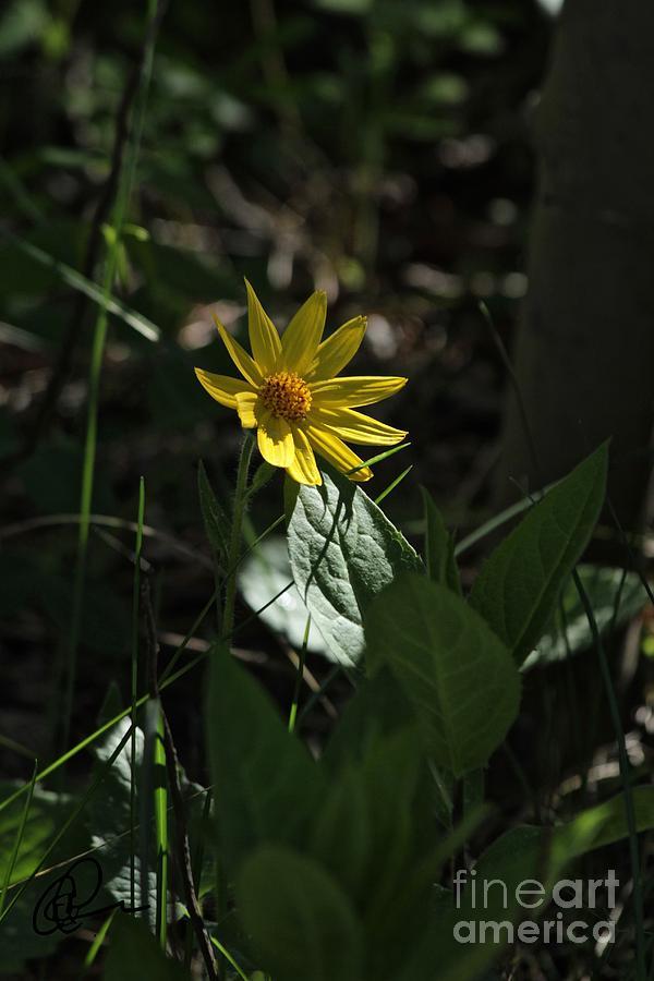 Sunflower by Ann E Robson
