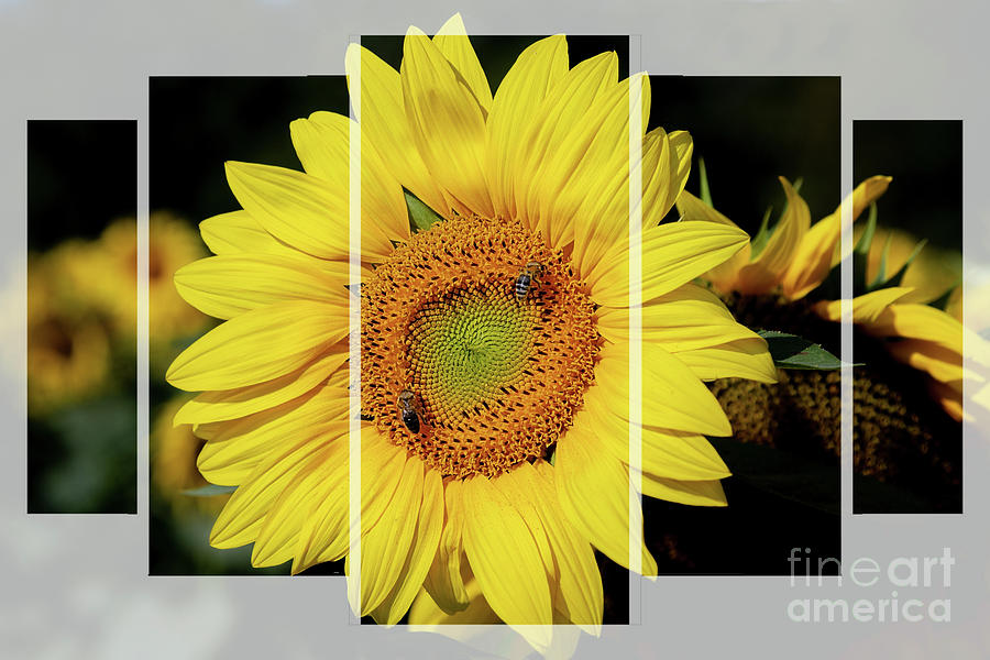 Sunflower Collage by Sharon McConnell