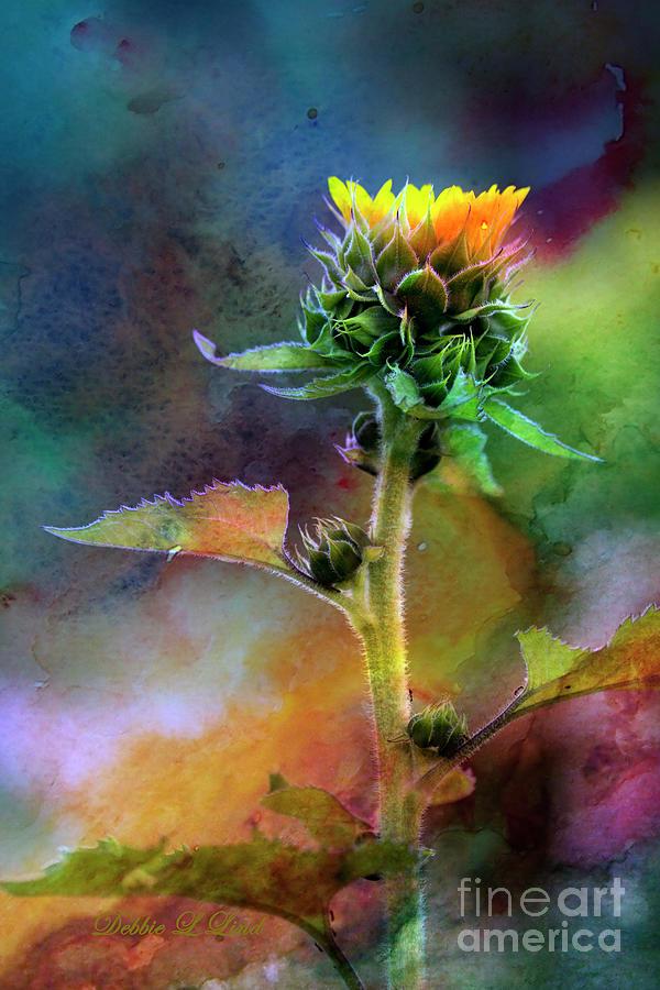 Sunflower Crown Photograph