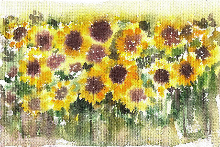 Sunflower fields by Asha Sudhaker Shenoy