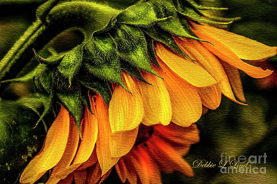 Sunflower Greeting Photograph