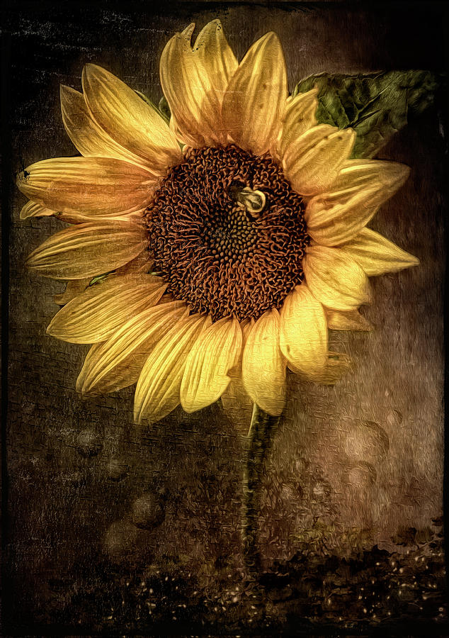 Sunflower by Maggy Pease