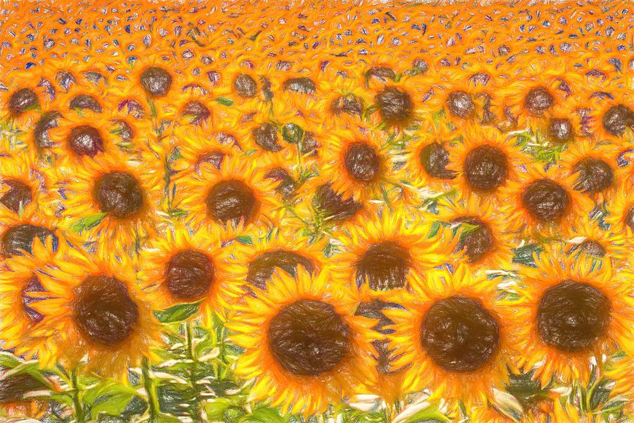 Sunflower Field Of Dreams Photograph