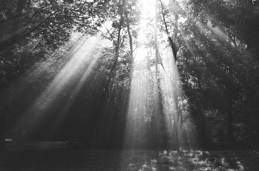 Sunlight Streaming Through Trees In Forest Photograph by Roman Pretot / EyeEm