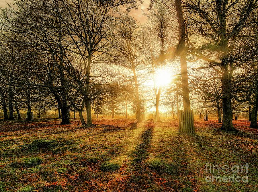 Sun Photograph - Sunlight Through The Trees by Leigh Kemp