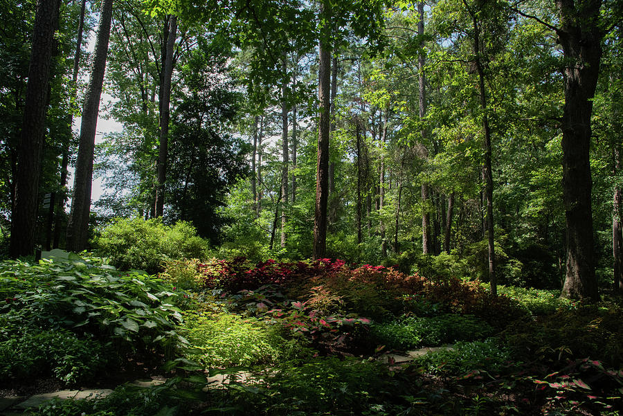 Arkansas Photograph - Sunlit Garden by Lea Rhea Photography