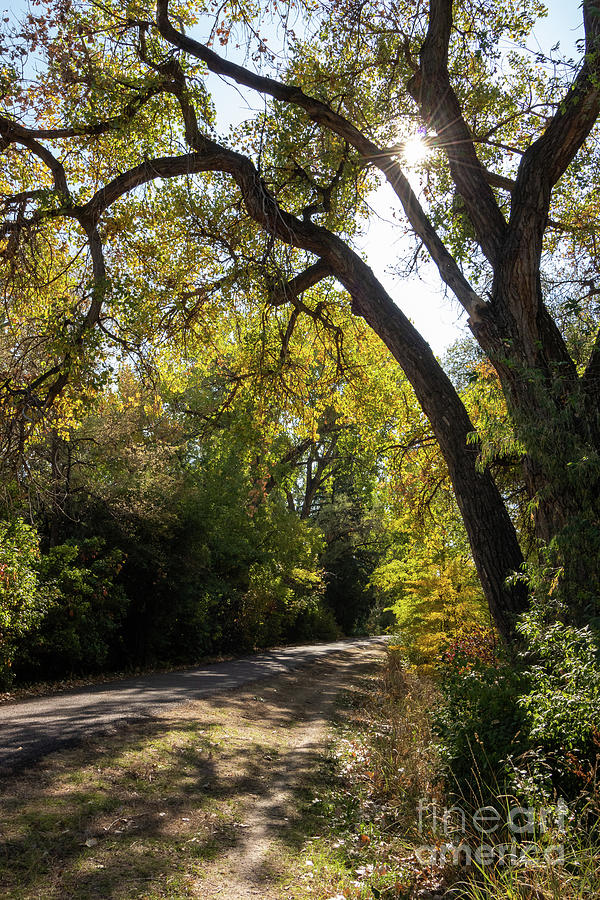 Autumn Photograph - Sunlit Path by Nicki Hoffman