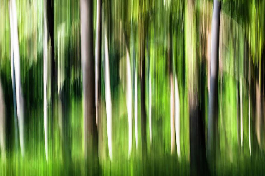 Sunlit Tree Trunk Impressions Photograph