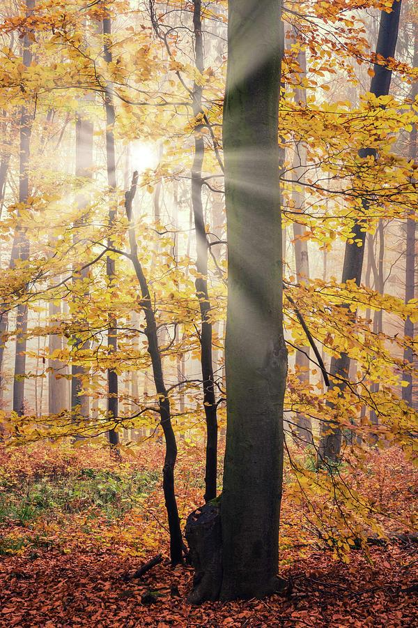 Sunny Day In The Forest Photograph