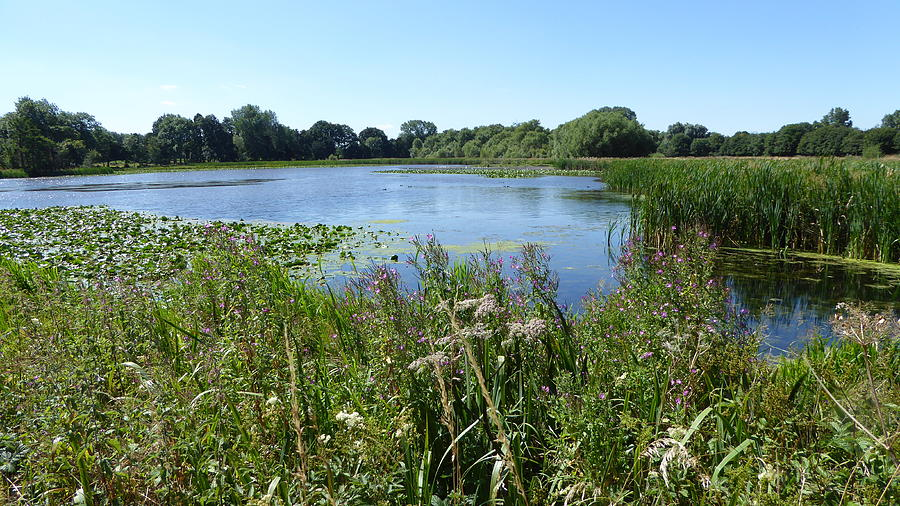 Sunny Wetland Lake, Flowers, Plants, Lilies And Rushes Photograph