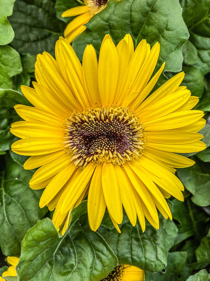 Sunny Yellow Photograph