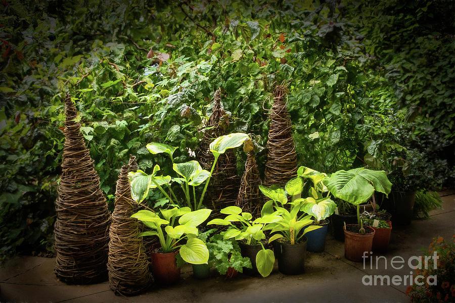 Garden Photograph - Sunnylea Summer Scene by Marilyn Cornwell