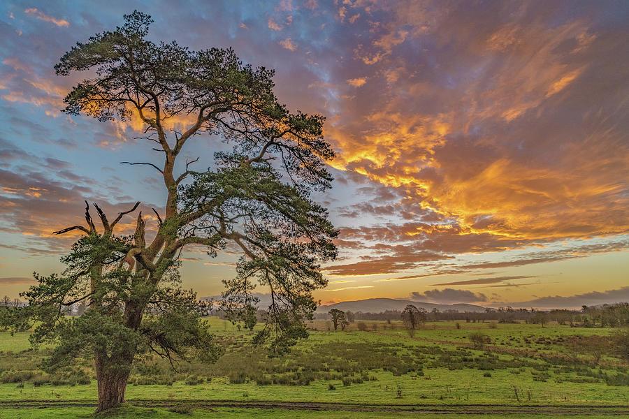 Sunrise and Pine by Rob Hemphill