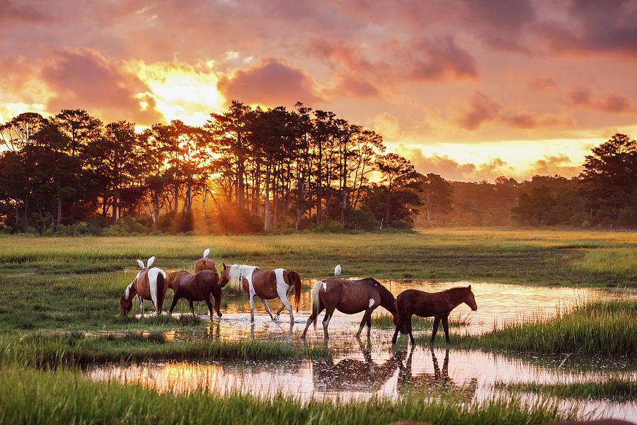 Horse Photograph - Sunrise At Chincoteague by Shelley Paulson