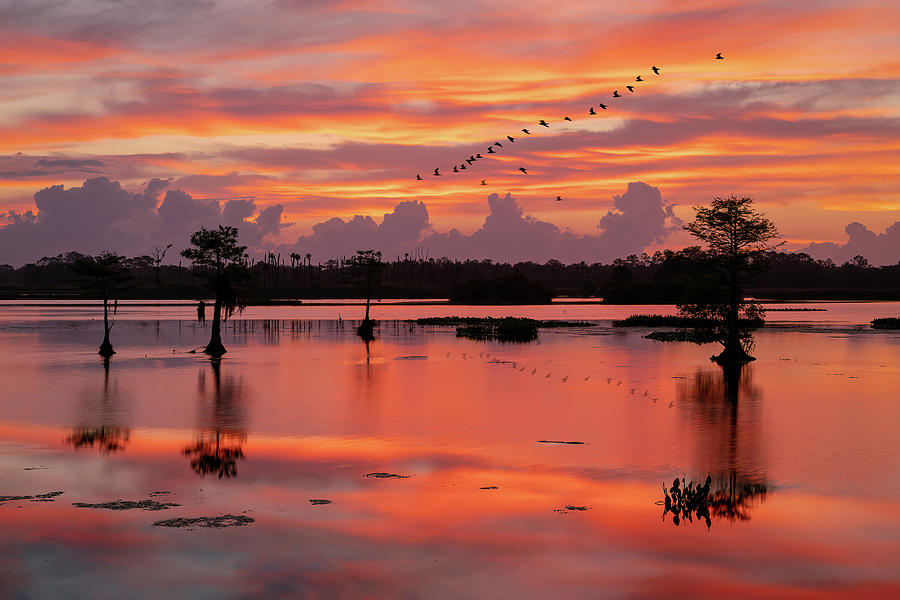 Sunrise at the Wetlands by Kevin McClish