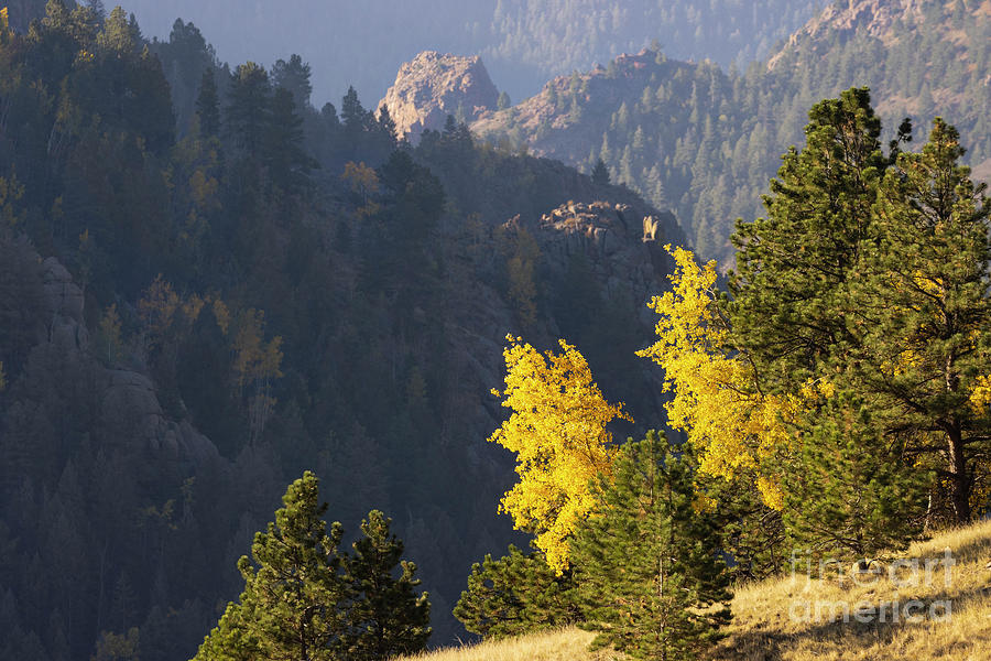 Sunrise Autumn Gold Above Treeline Photograph