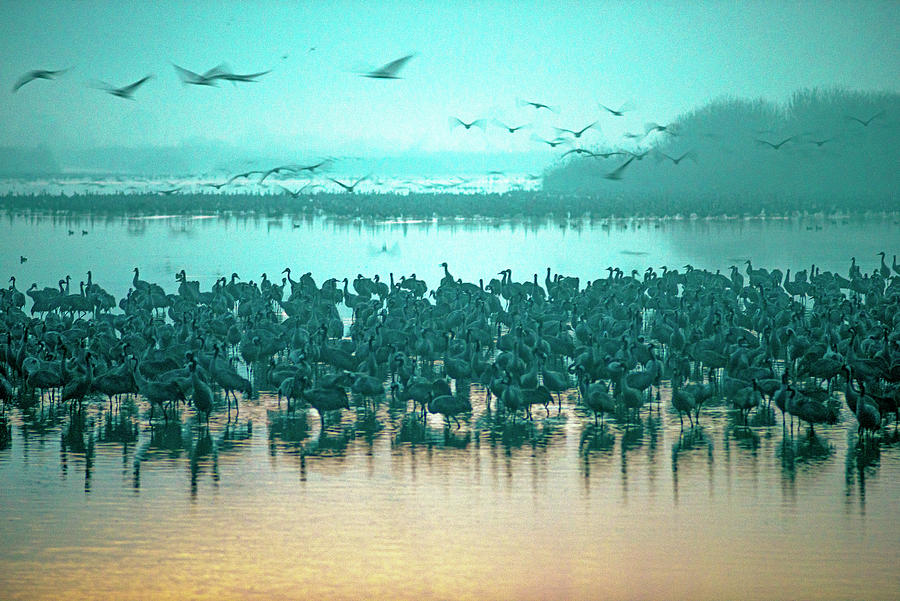 Sunrise Over The Hula Valley Israel 3 Photograph