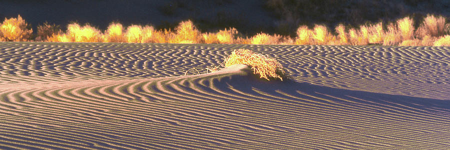 Sunrise Sand Dune Panorama by Jerry Griffin