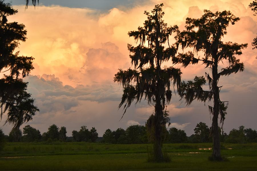 Sunset And Cypress Photograph