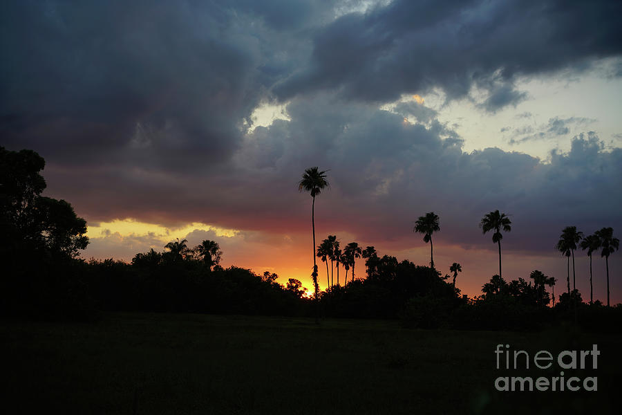 Florida Sunset Photograph - Sunset And Palm Trees by Felix Lai