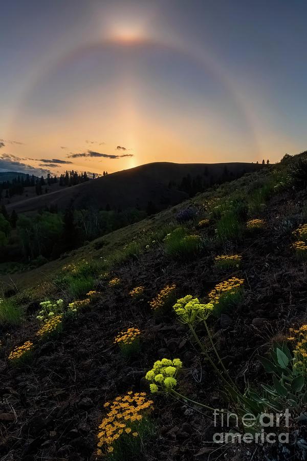 Sunset Cloudbow Photograph