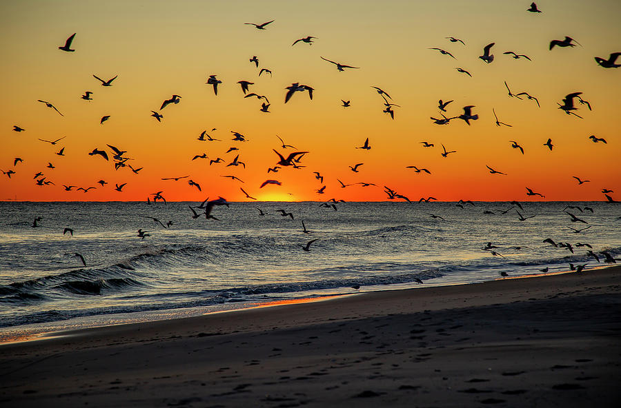 Sunset Frenzy by Cate Franklyn