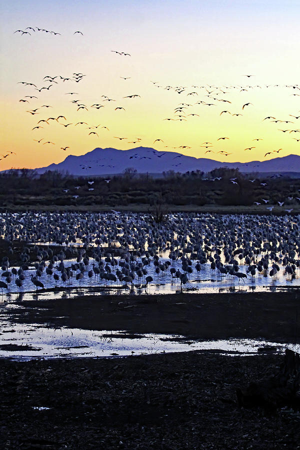 Sunset Migration At Bernardo Photograph