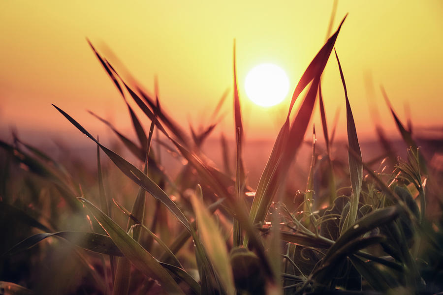 Sunset On A Grass Field Photograph