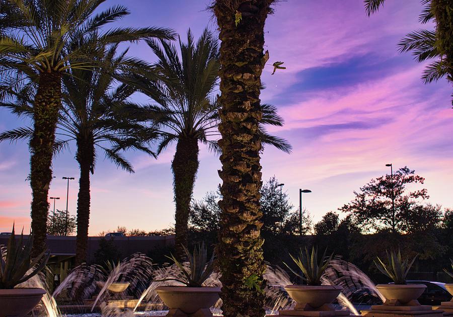 Sunset Palms by Portia Olaughlin