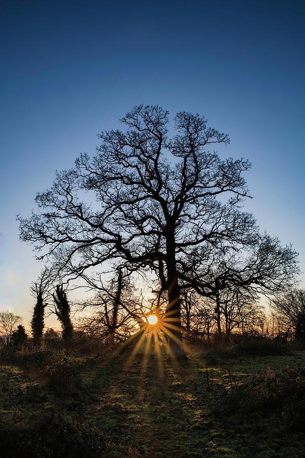Sunset Silhouette by Rob Hemphill