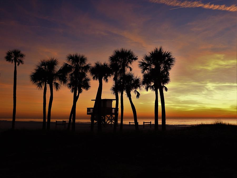 Sunset Silhouettes by Robert Stanhope