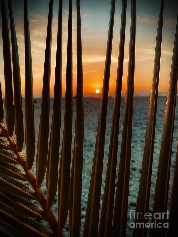 Sunset Through A Palm Eye View Photograph