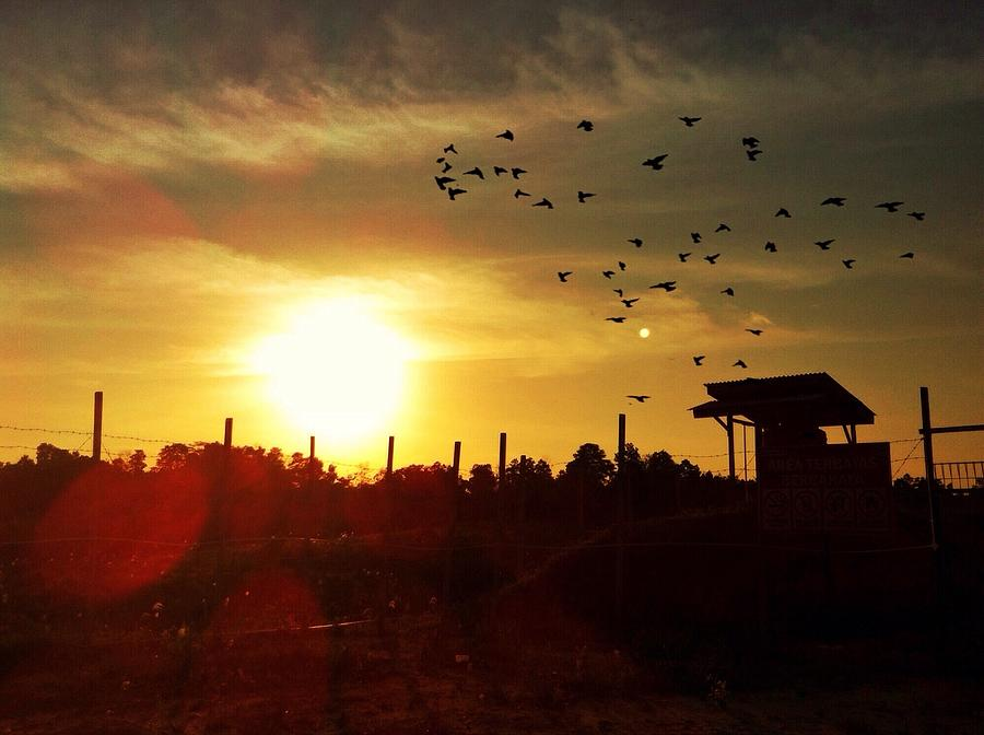 Sunset With Flock Of Birds Flying Against Sky Photograph by Resti Serlianasari / EyeEm