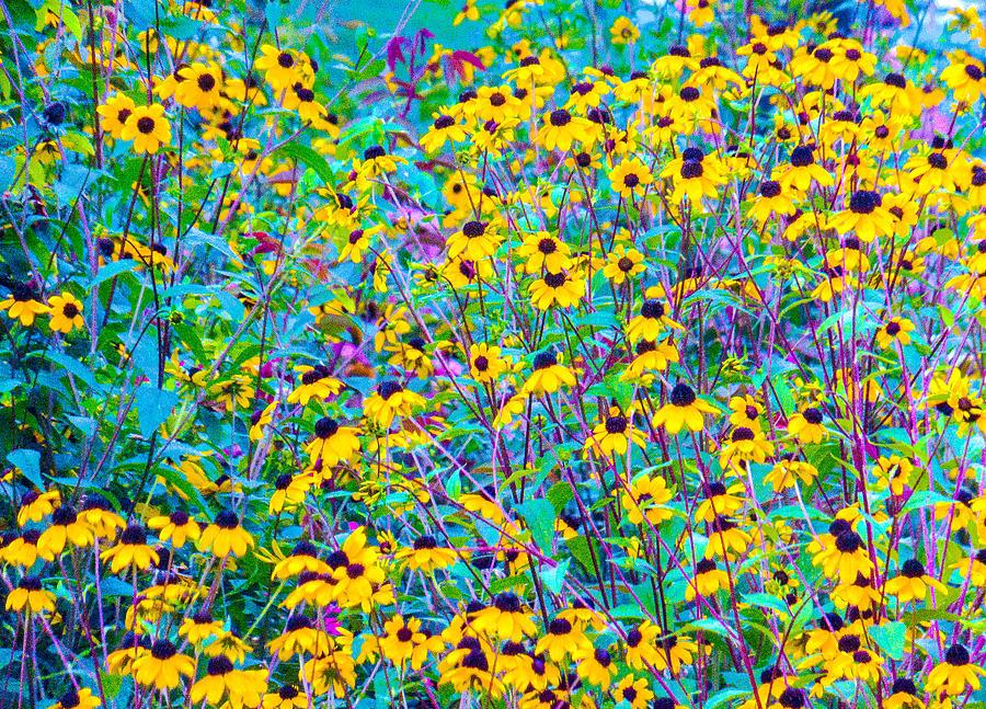 Wildflower Field Photograph by Ali Bailey